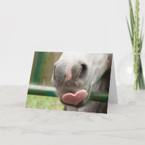 Horse Love Valentine's Day Card (Blank Inside)