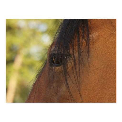 """""""Horse Lover"""" Gifts Postcard"""