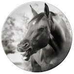 Horse Lover Porcelain Plates