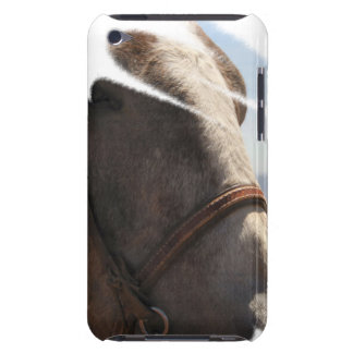 Horse Lover Stallion Face Closeup Animal Photo iPod Touch Cases
