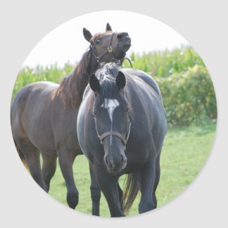 Horse Lovers Classic Round Sticker