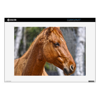 Horse-lover's Equine Animal Design Decals For Laptops