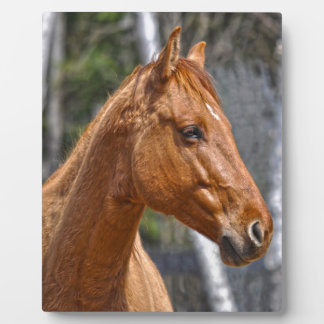 Horse-lover's Equine Animal Design Plaques