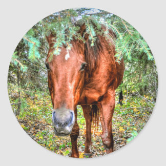 Horse-lover's Equine Photo on a BC Ranch Classic Round Sticker