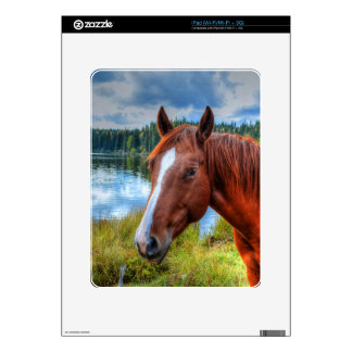 Horse-lover's Equine Photo on a BC Ranch Decals For The iPad