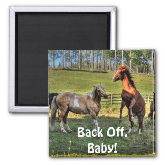 Horse-lover's Equine Photo on a BC Ranch Magnet