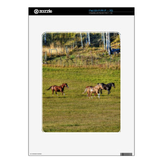 Horse-lover's Equine Photo on a BC Ranch Skins For iPad