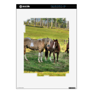 Horse-lover's Equine Photo on a BC Ranch Skins For iPad 2