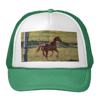 Horse-lovers Equine Ranch Horse Photo Trucker Hat