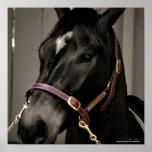 Horse Lovers  mare gelding stallion foal equine Print