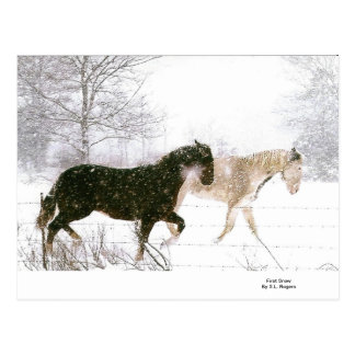 Horse lovers must have items postcard