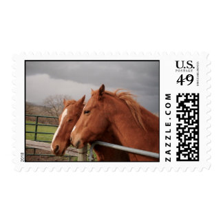 Horse Lovers Stamps