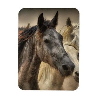 Horse Magnet