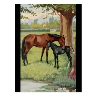 Horse Mare Foal Equestrian Vintage Image Postcard