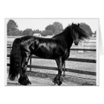 Horse modelling greeting cards