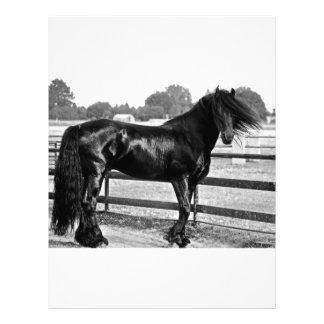 Horse modelling letterhead design