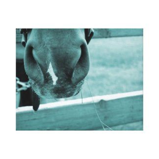 horse muzzle with hay fence blue canvas print