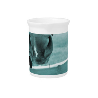 horse muzzle with hay fence blue drink pitcher