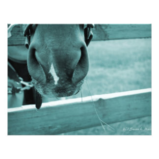 horse muzzle with hay fence blue full color flyer