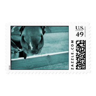 horse muzzle with hay fence blue stamp