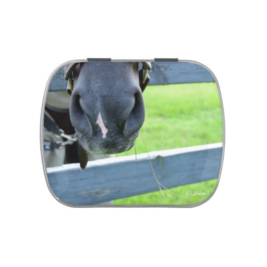 horse muzzle with hay fence jelly belly candy tins