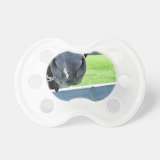 horse muzzle with hay fence pacifier