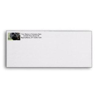 horse muzzle zoomed equine image envelope