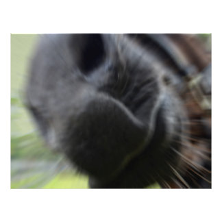 horse muzzle zoomed equine image flyer design