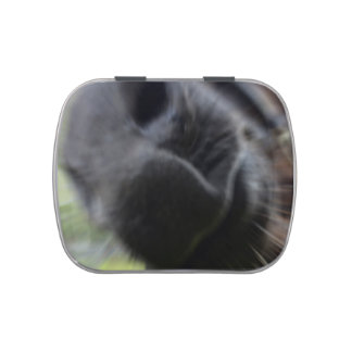 horse muzzle zoomed equine image jelly belly candy tins