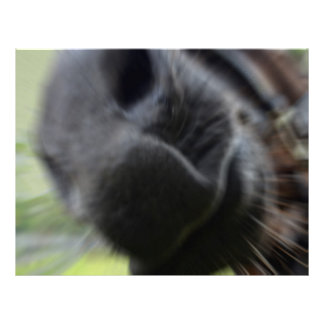 horse muzzle zoomed equine image letterhead template