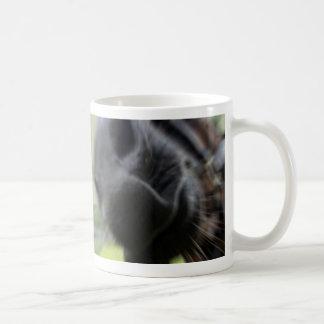 horse muzzle zoomed equine image mug