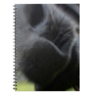 horse muzzle zoomed equine image note book