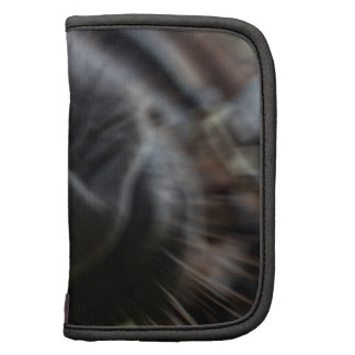 horse muzzle zoomed equine image organizers