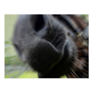 horse muzzle zoomed equine image postcard