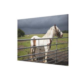 Horse near a fence canvas print