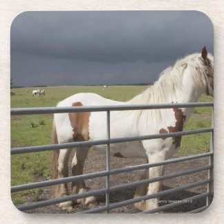 Horse near a fence drink coaster