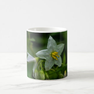Horse Nettle White Wildflower Floral Mug Cup