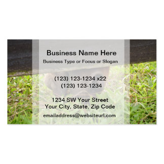 Horse nose grazing under fence business card template