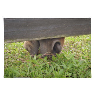 Horse nose grazing under fence cloth placemat