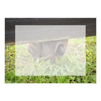 Horse nose grazing under fence custom invites
