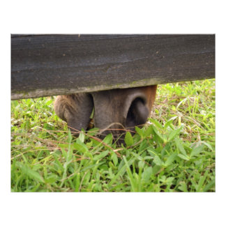 Horse nose grazing under fence full color flyer