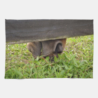 Horse nose grazing under fence kitchen towels