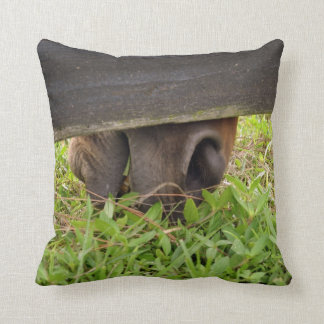 Horse nose grazing under fence pillow