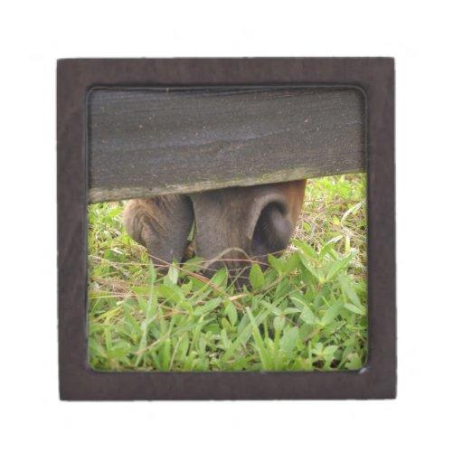 Horse nose grazing under fence premium keepsake boxes