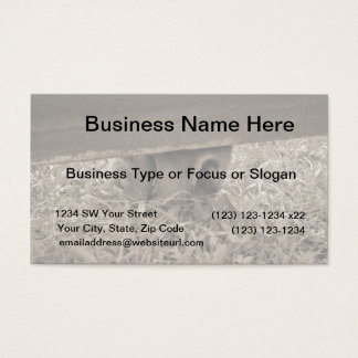 Horse nose grazing under fence toned business card
