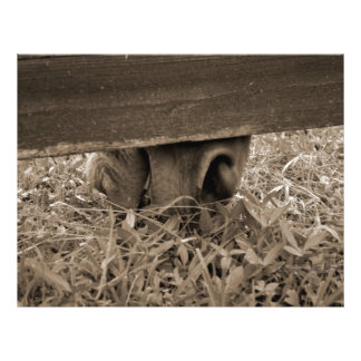 Horse nose grazing under fence toned flyers