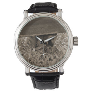 Horse nose grazing under fence toned wrist watch