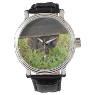 Horse nose grazing under fence wrist watch