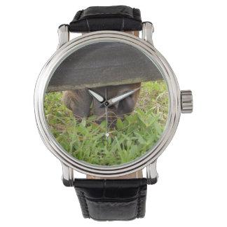 Horse nose grazing under fence wrist watch