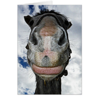Horse Nose Knows! Funny Smiling Horse Card